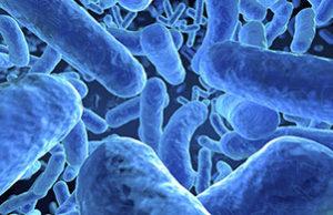 bacteria-control